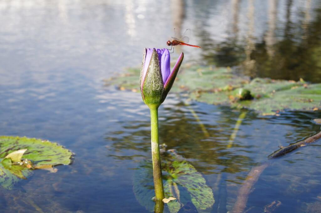 wochenrückblick-biotop-libelle-tantedine