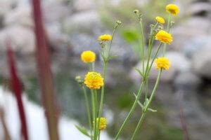 wochenrückblick-21-biotop-frosch-planzen-tantedine