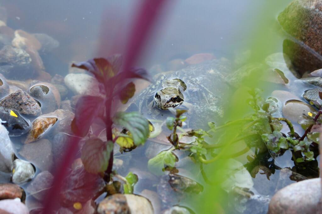 -wochenrückblick-21-biotop-frosch-planzen-tantedine