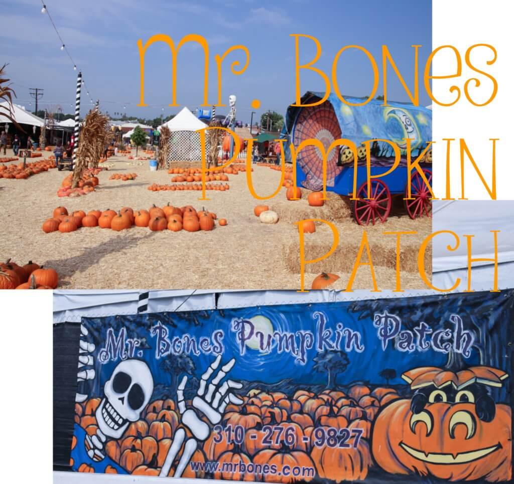 Mr. Bones Pumpkin Patch in Los Angeles tantedine