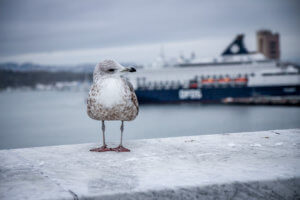 Oslo in vier Stunden mit der Color Line ab Kiel tantedine