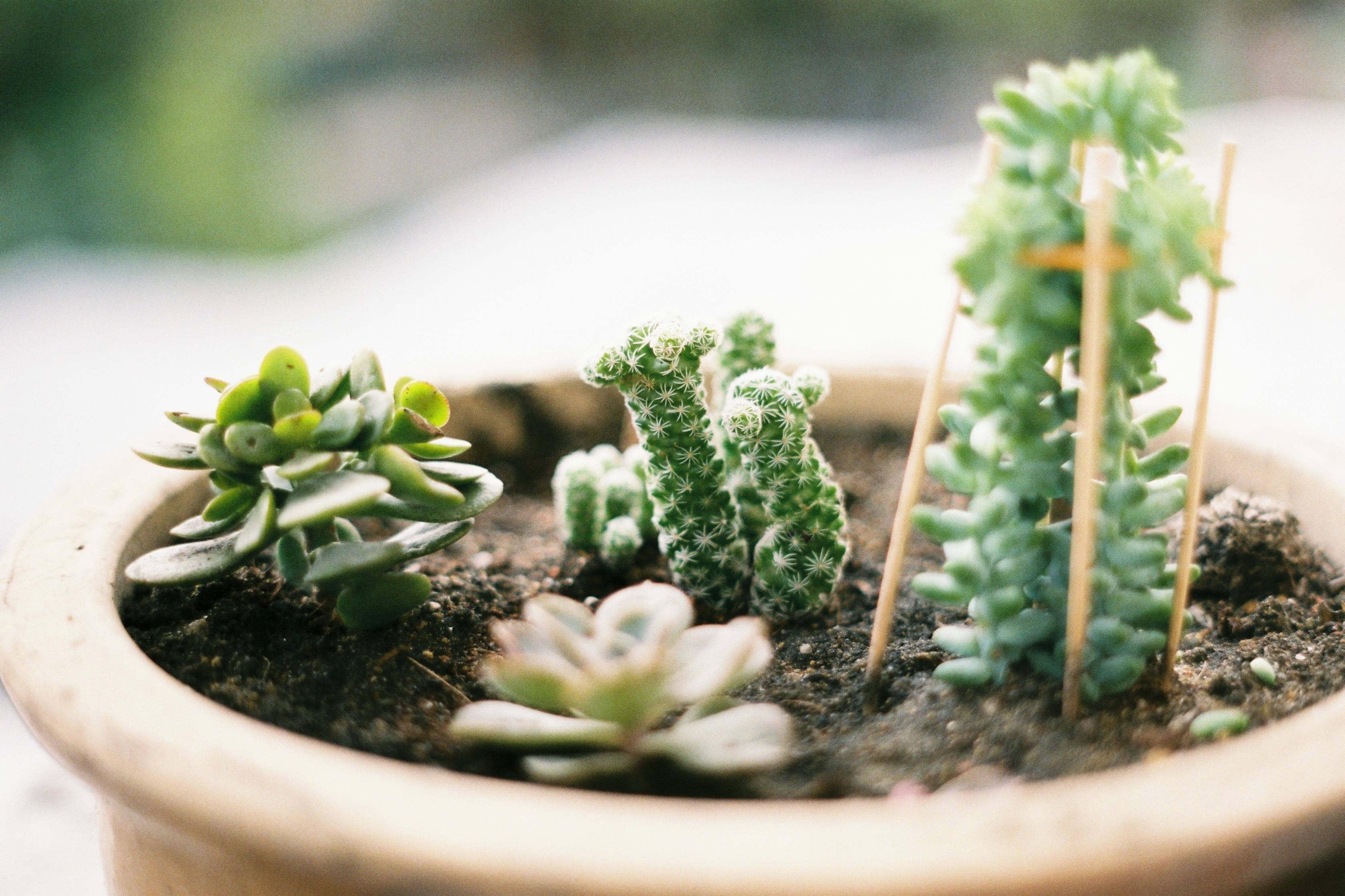 Ohne Internet muss man im Garten arbeiten Sukkulenten tantedine