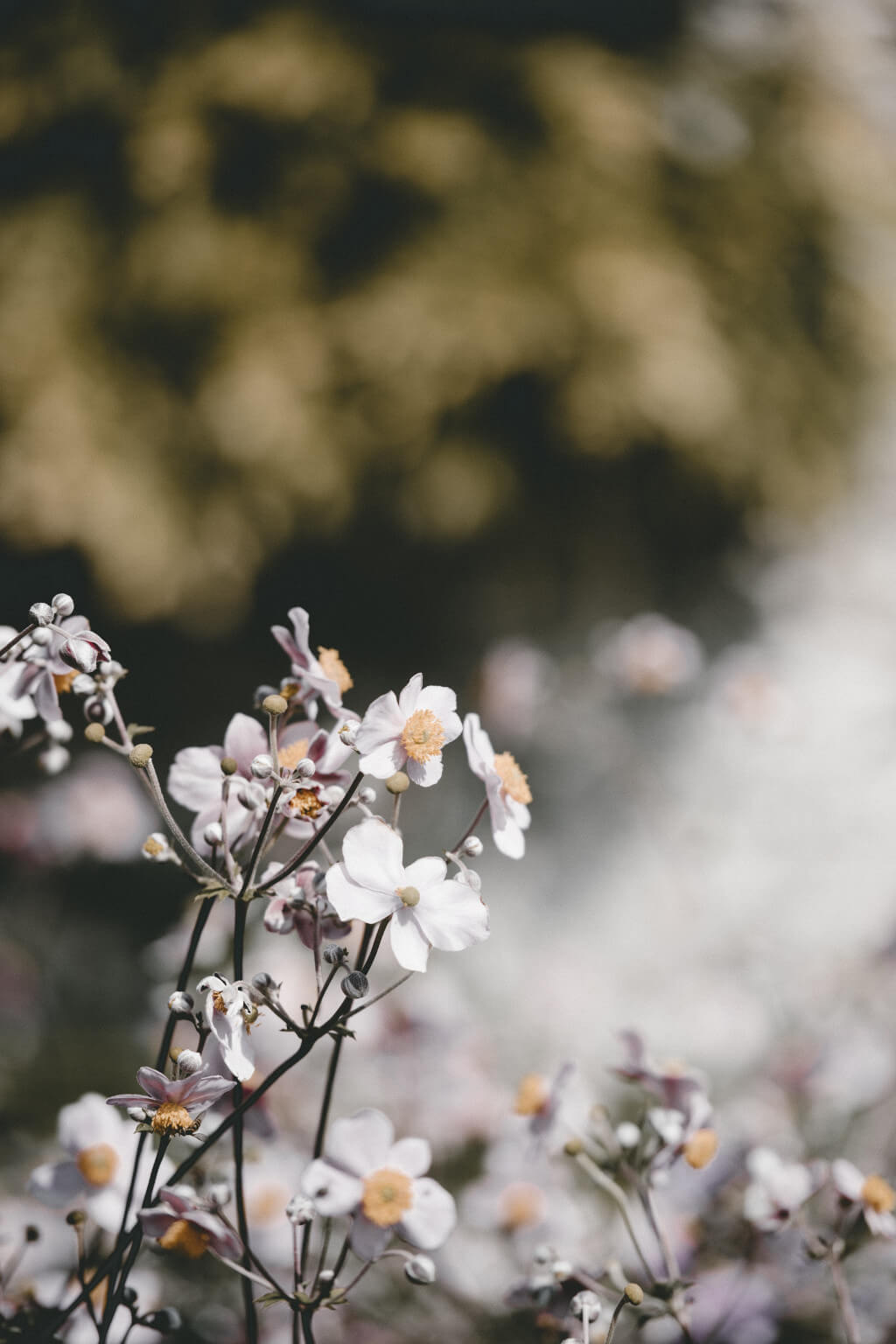 Sommer SOnne Sonnenschein Wochenrückblick Blumen Garten tantedine