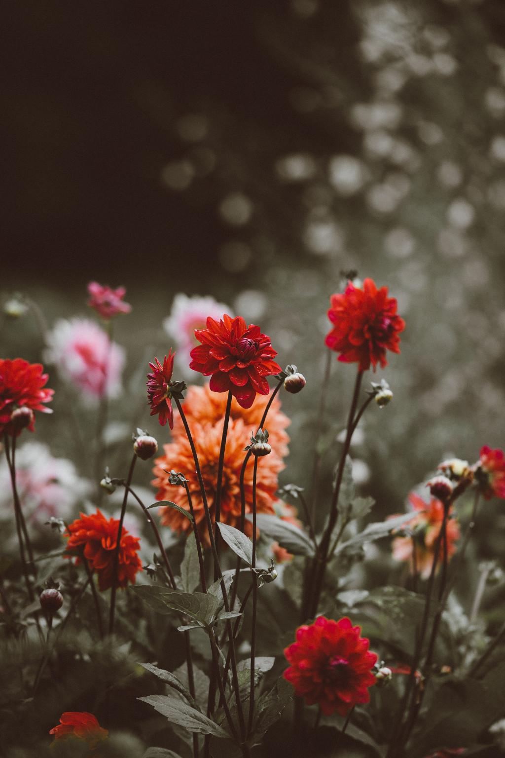 Heuschnupfen nervt Blumeliebe Garten Wochenrückblick Garten Monstera Dahlie Lilie tantedine