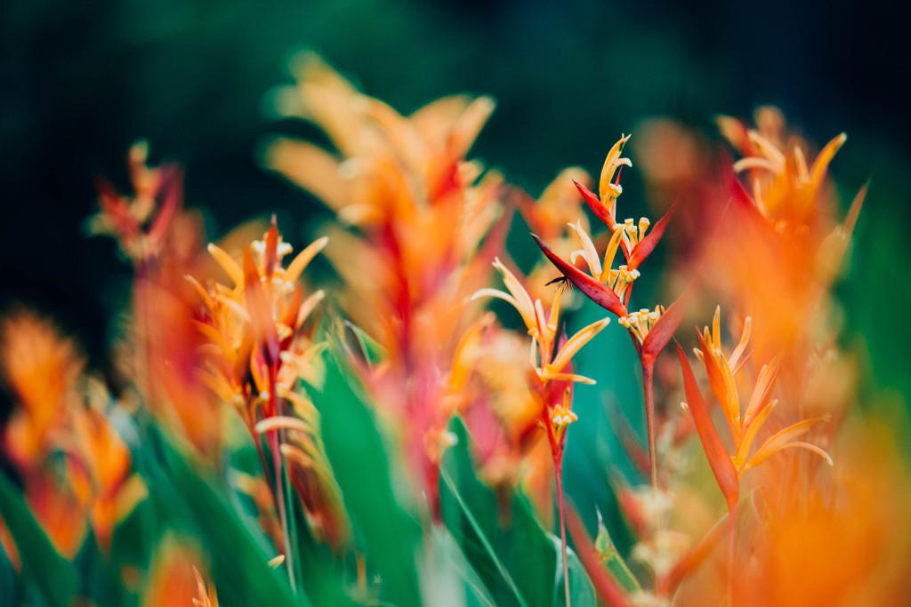 Heuschnupfen nervt Blumeliebe Garten Wochenrückblick Garten Monstera Lilie tantedine