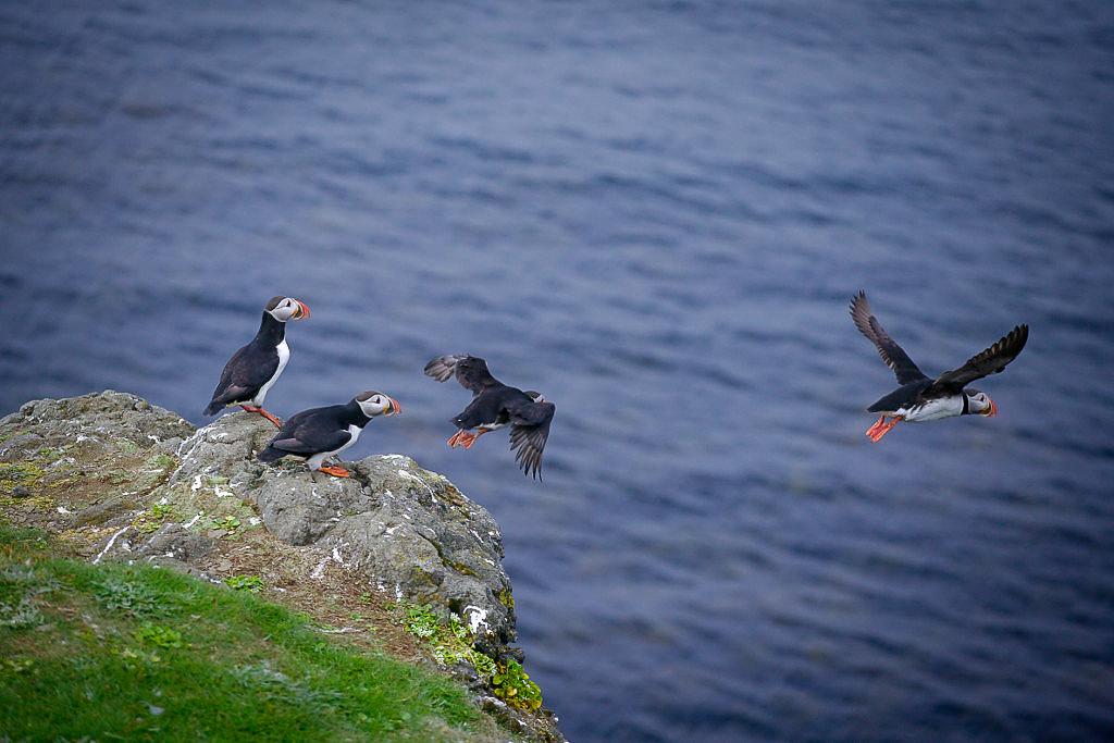 Isle of Skye Schottland Sehenswürdigkeiten Puffins Hebrieden Highlands tantedine