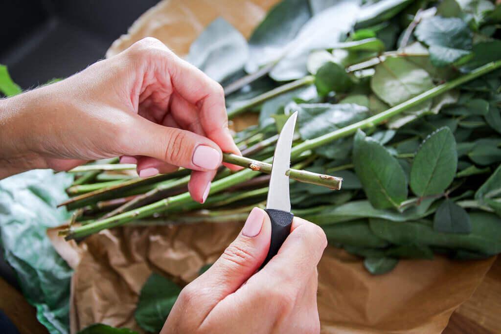 Blumenversand mit Blume2000.de so funktioniert's Tipps und Tricks tantedine