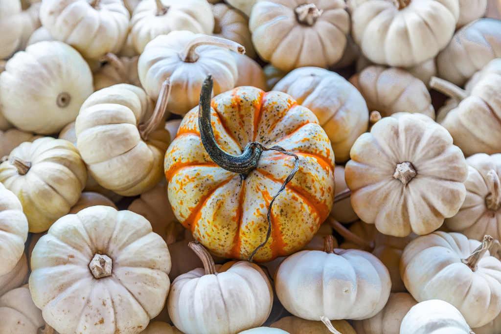 Hallo Herbst Lifestyle Blogazine tantedine